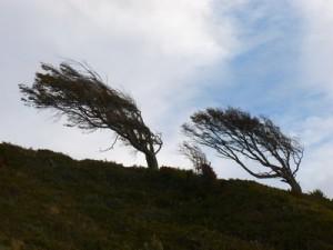 127-arbres-drapeaux-300x225