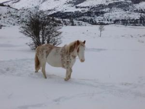 169-cheval-rose-300x225