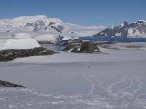 Championnant du monde de luge - vue sur la Péninsule Antarctique de Skua Island - Argentine Island