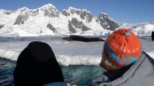 Devant un phoque léopard, en annexe dans le cimetière d'icebergs - Antarctique