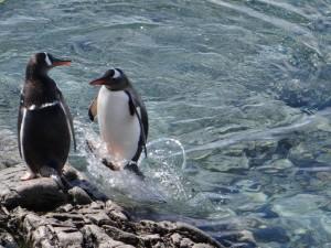 Enfin, j'y suis arrivé ! Portal Point, Péninsule Antarctique
