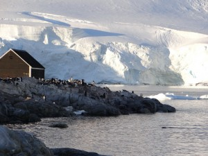 Waterboat Point et sa colonie de manchots papous, Péninsule Antarctique