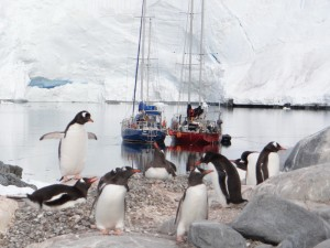 A couple de Northhanger - Alice creek, Wiencke Island, Antarctique