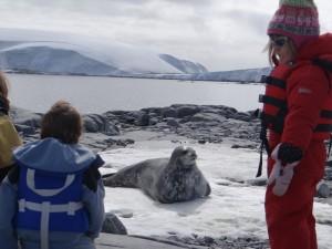 Ce phoque de Weddell a enfin détecté notre présence ! - Pitt Islands, Antarctique