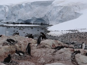Une petite partie des 4000 manchots de Waterboat Point, Péninsule Antarctique