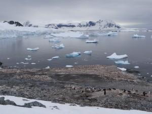 Colonie de 4000 manchots - Cuverville Island, Antarctique