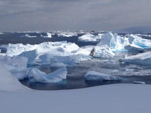 Le cimetière d'iceberg - Baie de la Salpêtrière, Booth/Hovgaard Islands, Antarctique