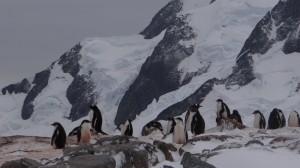 La crèche - Pléneau Island, Antarctique