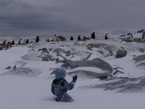Au revoir les copains, à bientôt ! Pléneau Island, Antarctique