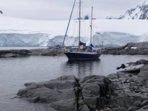 entre les cailloux et si près de la zone de débarquement - Port Lockroy, Goudier Island, Antarctique